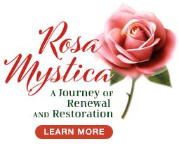 Rosa-Mystica_bug-2